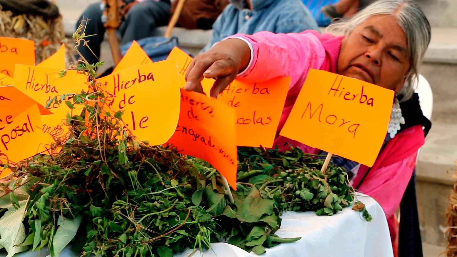 La medicina tradicional, herencia de…