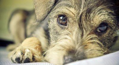 5 consejos prácticos para proteger a tus mascotas